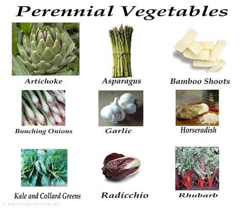 perennial garden vegetables perennial vegetables garden