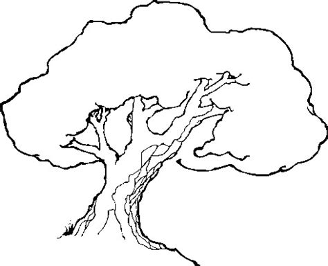 line drawings trees line trees cliparts co