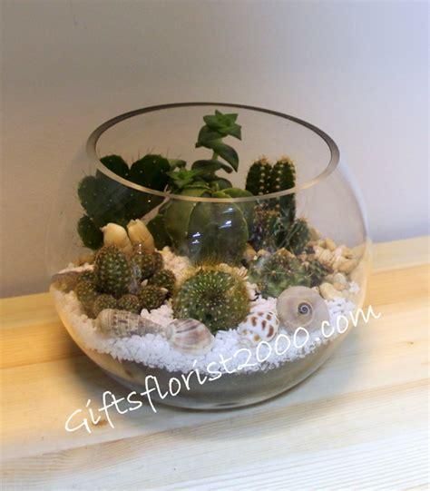 Sea Shell Vase Dish Garden Cactus Garden Cactus In Glass Bowl Plant