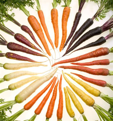carrot colors file carrots of many colors cutout jpg