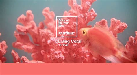 ordinary Pantone Color Of The Year 2020 #4: Pantone-COY-2019-16-1546-Living-Coral-Feat.jpg