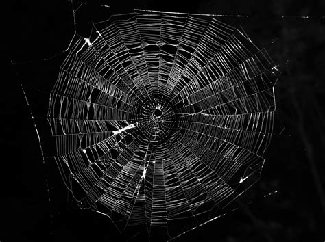 file typical orb web photo jpg wikimedia commons