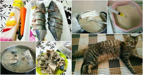 makanan rumah untuk anak kucing cara buat wetfood untuk anak kucing di rumah barulah
