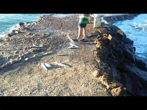 mazatlan sinaloa mexico youtube pesca en mazatl 225 n sinaloa m 233 xico youtube