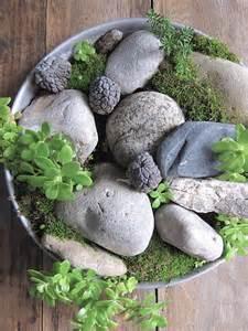cultiver un jardin de mousse
