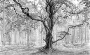 How To Draw A Tree Psikotes Pencil Drawing Tree