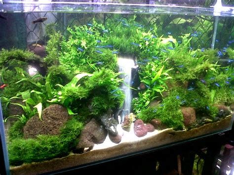 cara membuat filter aquarium air tawar cara membuat air terjun aquascape dunia akuarium