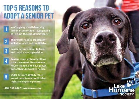 8 Reasons To Adopt A Pet From A Shelter by Lake Humane Society Reasons To Adopt A Senior Pet