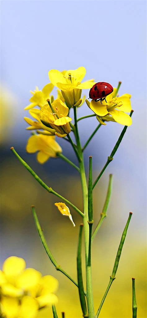 iphone wallpaper yellow flowers ladybug and yellow flowers iphone x wallpaper hd iphone
