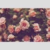 Flower Background Wallpaper Tumblr - clipartsgram.com