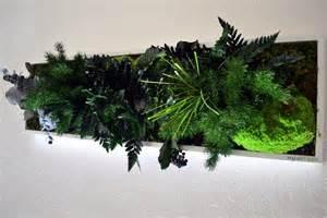 dübel aus der wand holen wandschmuck konservierte pflanzen an der wand ohne