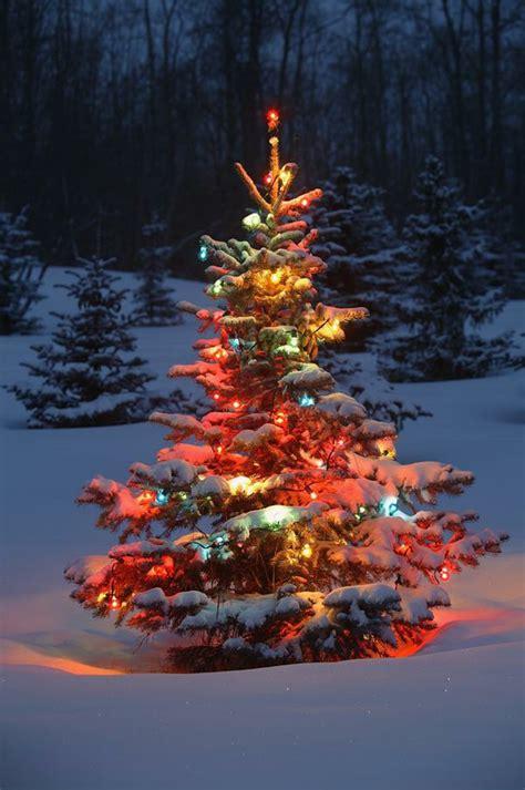 d nger f r weihnachtsbaum weihnachtsbaum mit beleuchtung 40 unikale fotos archzine net
