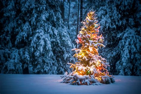 snow covered christmas trees snow covered tree free wallpaper free snow covered tree