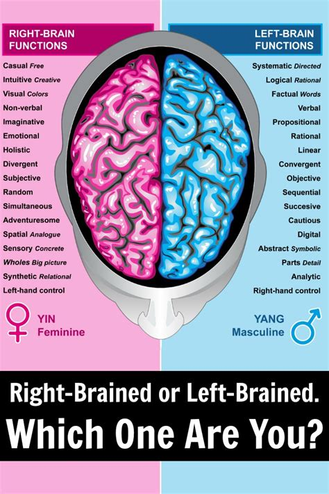 Brain Left Or Right right brained or left brained which one are you
