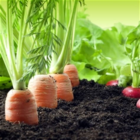 Vegetable Topsoil Free Delivery Topsoil Shop Buying Soil For Vegetable Garden
