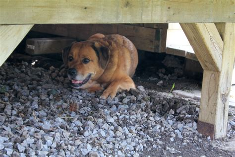 dog house under deck dog house under deck www pixshark com images galleries with a bite