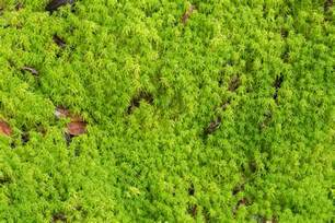is sphagnum moss peat moss what s the difference between