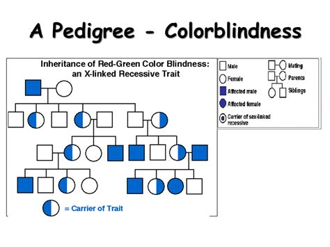 what of trait is color blindness linked traits presentation biology sliderbase
