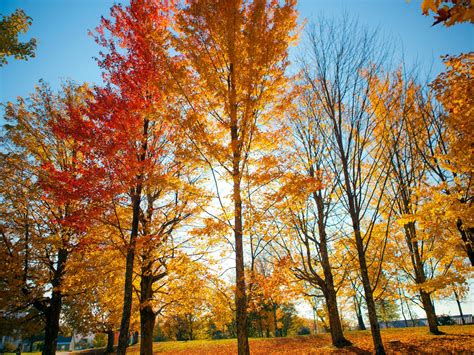 in fall new england fall foliage road trips travel channel