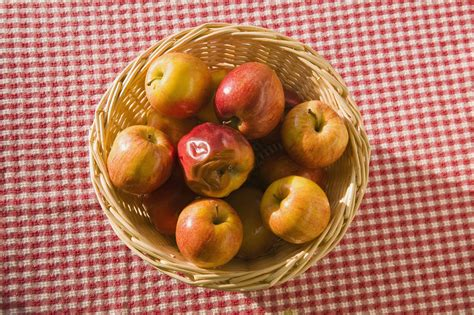 fruit ripening fruit ripening and ethylene experiment