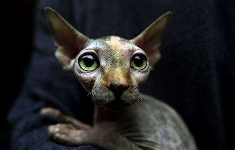 Cat La 111 28 138 gato el mundo en fotos
