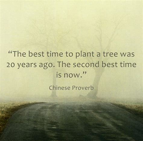quot the best time to plant a tree was 20 years ago the