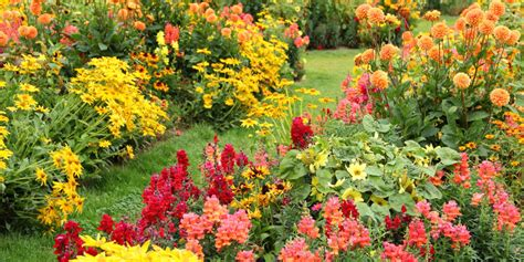 plants blooming ornamental flowering plants for autumn colour the garden