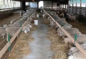 sheep barn layout sheep barn layout car interior design