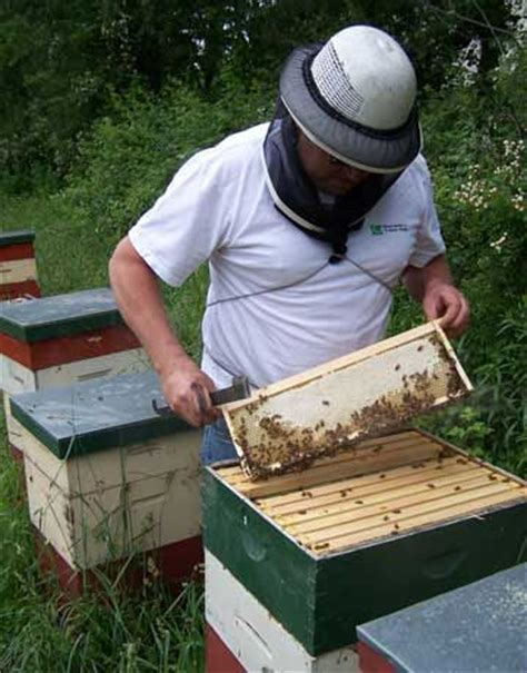 backyard beekeeping for beginners backyard beekeeping beekeeping and backyards on pinterest