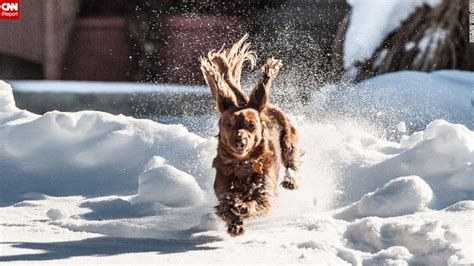 puppies in snow puppies frolic in the snow cnn