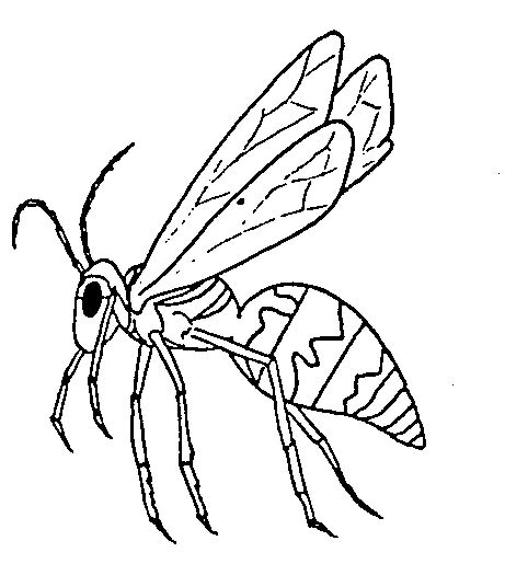 coloring page yellow jacket insect coloring pages getcoloringpages com