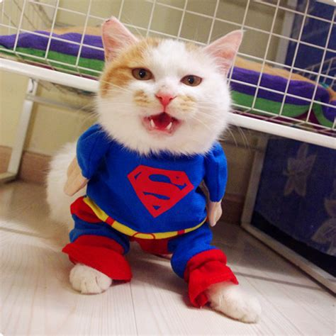 Dress Baby Kucing fashion cotton superman clothes chihuahua clothes