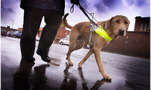 Blind Dogs Jobs Guide Dogs A Tale Of Two Tescos Guardianletters