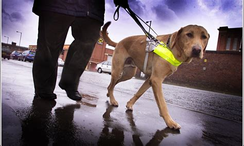 Guide Dogs For The Blind | guide dogs a tale of two tescos guardianletters