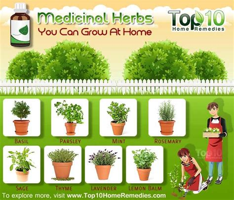 types of garden herbs 17 best images about how to grow your own herbs and