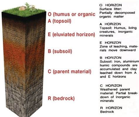 soil horizons diagram image gallery soil horizons