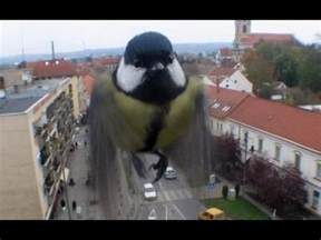 what to do if a bird flies into your window youtube
