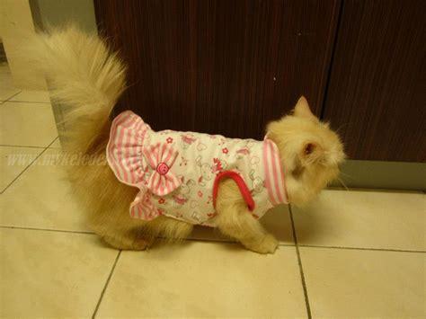 jual baju untuk kucing baju kucing menjual baju kucing kucing parsi comel related