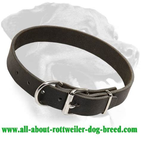 rottweiler leather collars get genuine leather rottweiler collar walks obedience