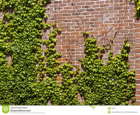 Efeu Wand by Wall Stock Image Image 780171