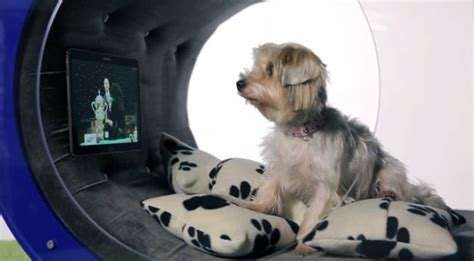 high tech dog house samsung unveils a 30 000 high tech dog house