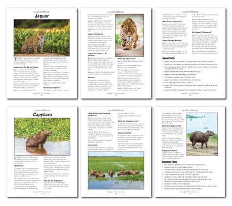 printable animal fact sheets rainforest animals printable facts pack from active wild