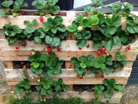 Pallet Strawberry Planter Marble Gardens Garden Strawberry Garden Ideas