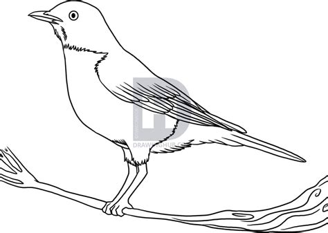 How To Draw Bird How To Draw A Robin Step By Step By Darkonator Drawinghub