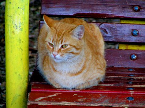 how to stop cats jumping on benches file cat no 13 the one on the bench jpg wikimedia commons