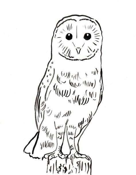 barn owl coloring page samantha bell