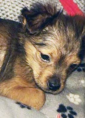 puppy hammer animal cruelty news updates and cases express co uk