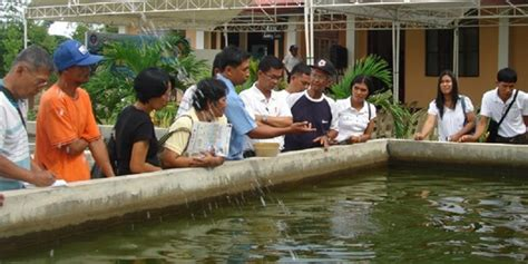 Backyard Fishpond Philippines Tilapia Farming Skills Training Held The Official