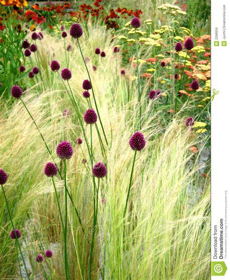 imagenes flores salvajes flores salvajes imagenes de archivo imagen 2268934