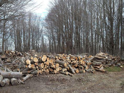 sede legale e domicilio fiscale andreatta g 2016 imprese forestali estere possibili